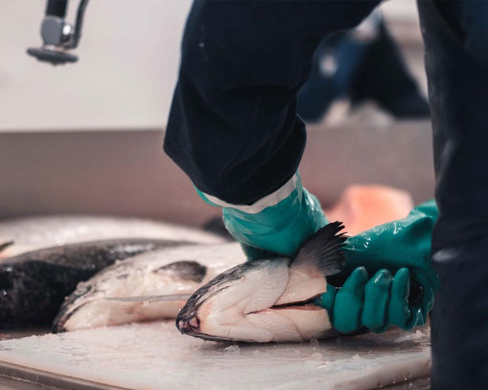 Fiskebäck seafood salmon